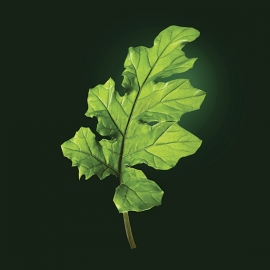Acanthus active ingredient | René Furterer