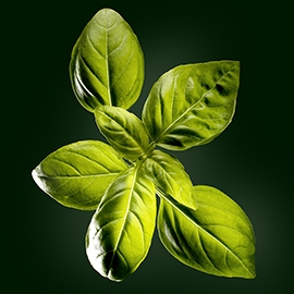 Basil active ingredient | René Furterer