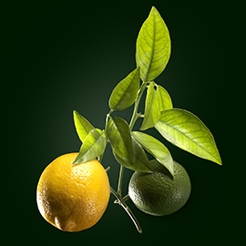 Lemon active ingredient | René Furterer
