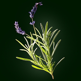 Lavender active ingredient | René Furterer