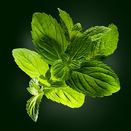 Mint active ingredient | René Furterer