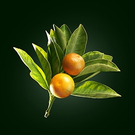 Sweet orange active ingredient | René Furterer