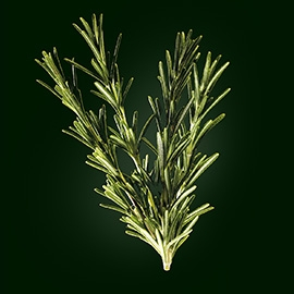 Rosemary active ingredient | René Furterer