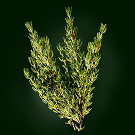 Thyme active ingredient | René Furterer