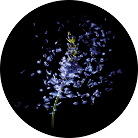 rf_website_lavender_actives_product-page_400x493.png (270×270)