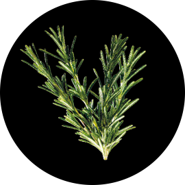 rf_website_rosemary_actives_product-page_400x493.png (270×270)